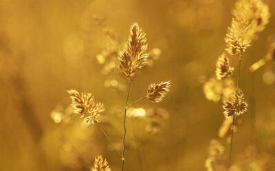 """Degussa: """"El oro de inversión es fundamental en una cartera diversificada"""""""