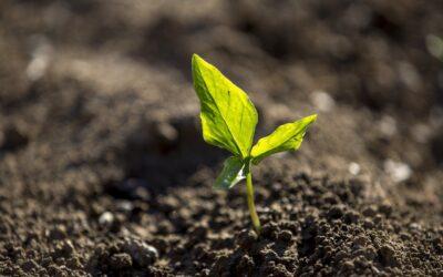 Alimentar y preservar el planeta