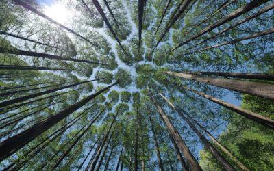 abrdn lanza el fondo Responsible Global Asset Strategies